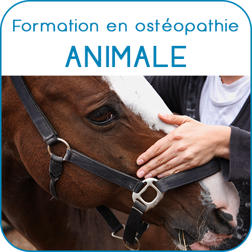 eao ecole aquitaine osteopathie formations stages osteopathe bordeaux gironde nouvelle aquitaine accueil formations osteopathie animale 3 - Ecole Aquitaine Ostéopathie - Les formations (formation stage ostéopathe Bordeaux Gironde Nouvelle Aquitaine) - Ecole Aquitaine Ostéopathie - Les formations (formation stage ostéopathe Bordeaux Gironde Nouvelle Aquitaine) - Ecole Aquitaine Ostéopathie - Les formations (formation stage ostéopathe Bordeaux Gironde Nouvelle Aquitaine)