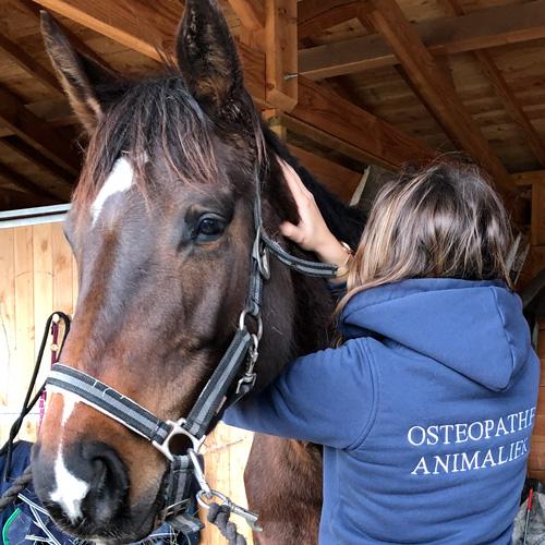 accueil cheval 01 - Accueil Ecole Aquitaine Ostéopathie (formation stage ostéopathe Bordeaux Gironde Nouvelle Aquitaine) -  -