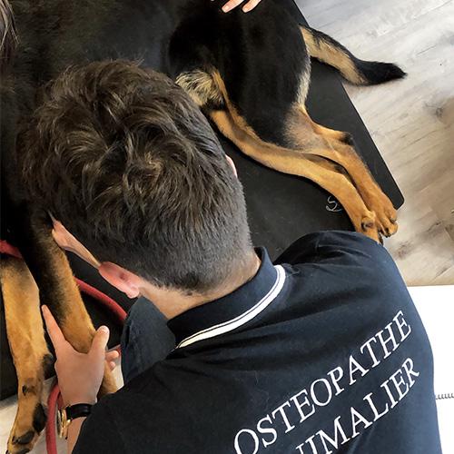 accueil chien 06 - Accueil Ecole Aquitaine Ostéopathie (formation stage ostéopathe Bordeaux Gironde Nouvelle Aquitaine) -  -