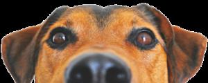 chien inscription registre 300x120 - Ecole Aquitaine Ostéopathie - Ostéopathie animale - Ecole Aquitaine Ostéopathie - Ostéopathie animale - Ecole Aquitaine Ostéopathie - Ostéopathie animale